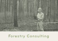 Wisconsin Forestry Consulting