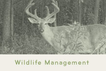 MN Wildlife Management